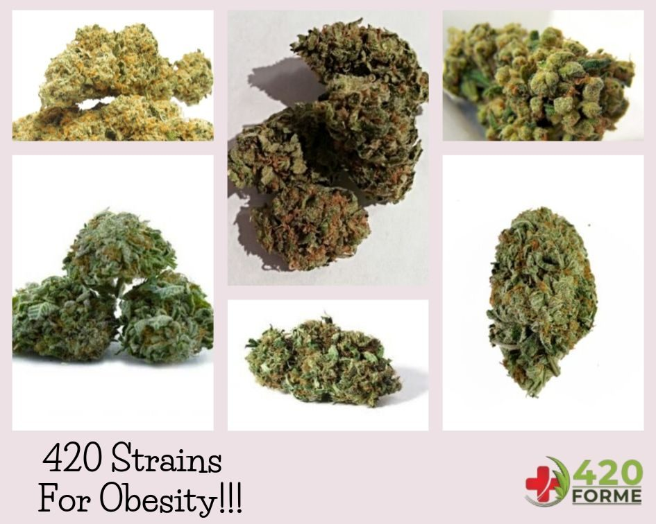 420 Strains Are For Obesity