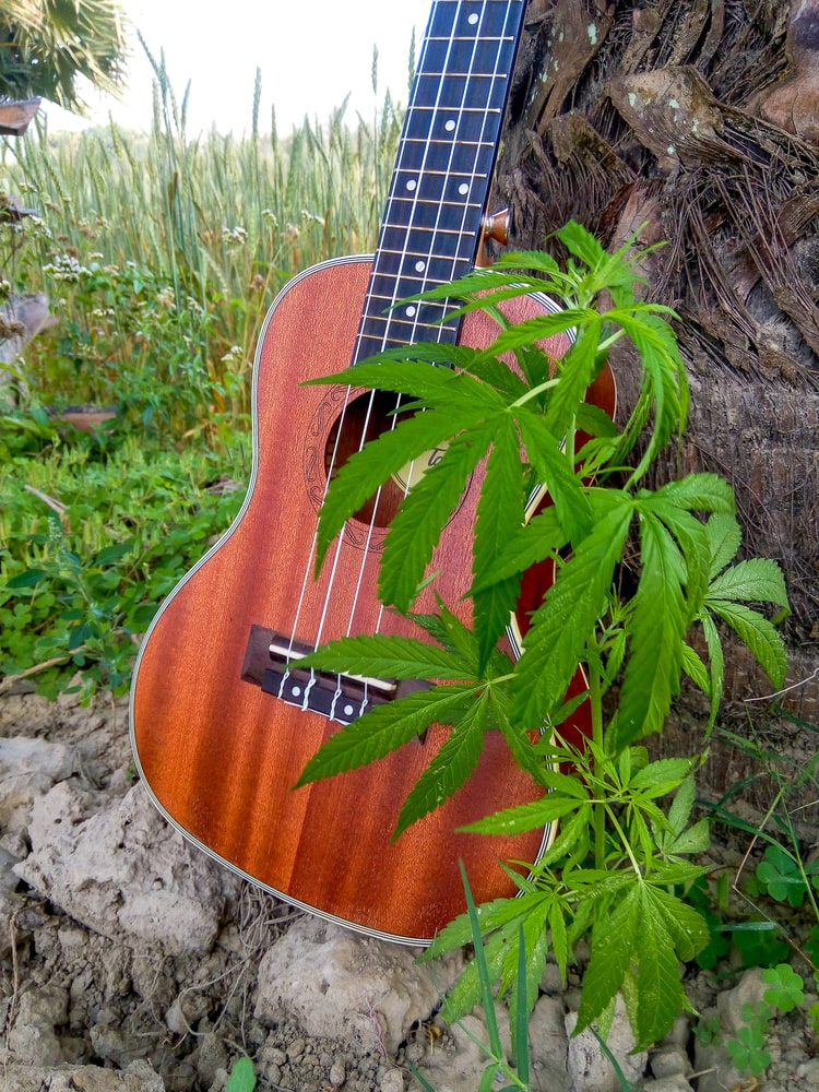 Cannabis & Guitar